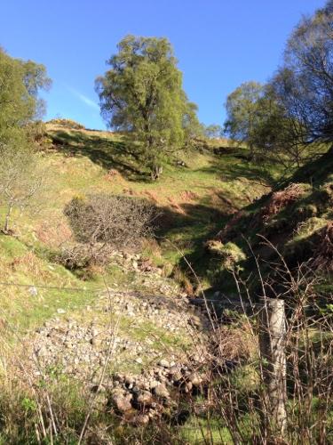 Dornoch Firth countryside 2