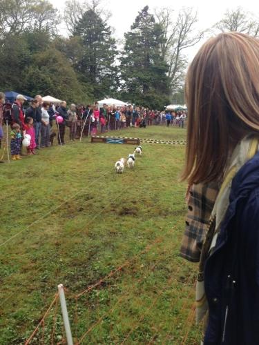 Terrier racing 2