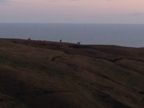Cape Wrath - Deer silhoutetted