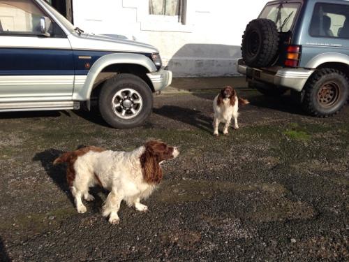 Cape Wrath - Spring spaniel patrol