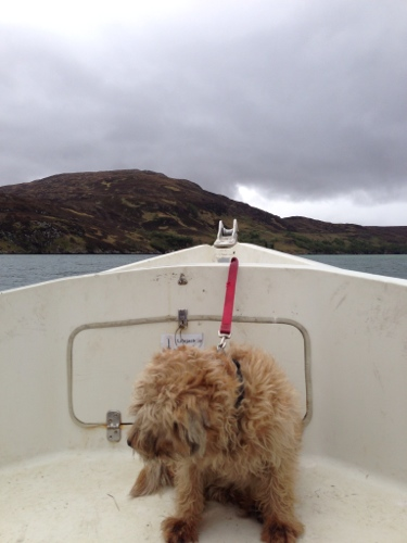The Ferry Boat Dog