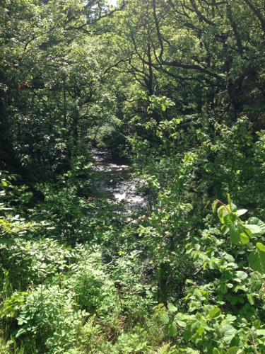 Lush vegetation next to mountain stream