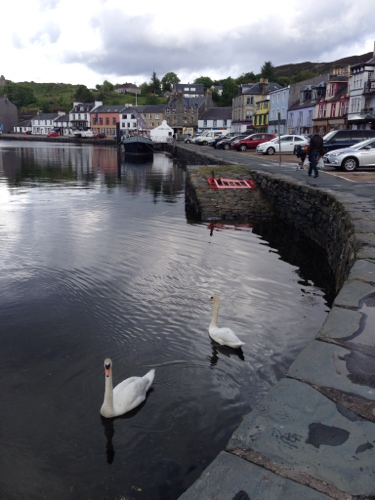 Tarbert harbour and swans