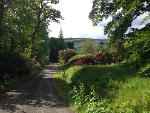 Verdant roads near Cairndow