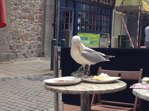 Beware the seagulls - they'll nab your breakfast