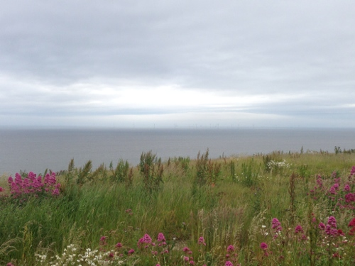 Colwyn Bay - wild flowers