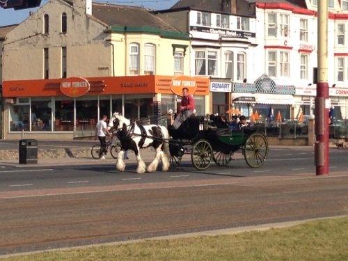 Pony and carriage ride anyone?