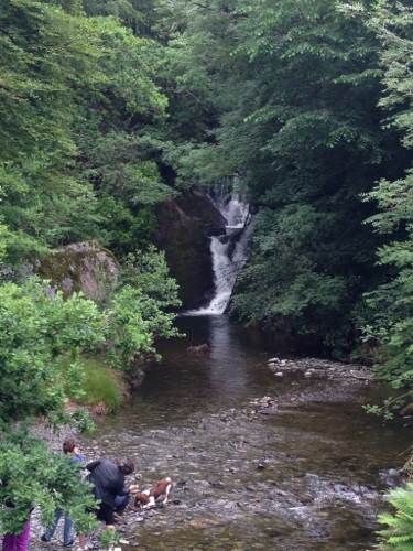 Waterfall and enthusiastic springer spaniels