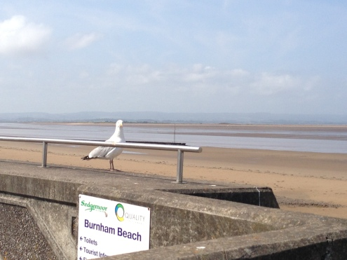 Burnham-on-Sea - seagull