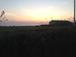 Trevedra Farm Sunset 5