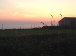 Trevedra Farm Sunset 6
