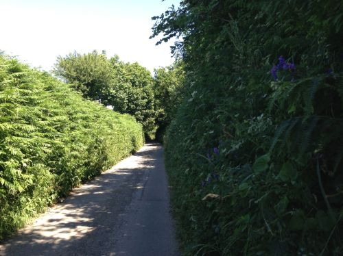 Narrow country lanes out of Salcombe