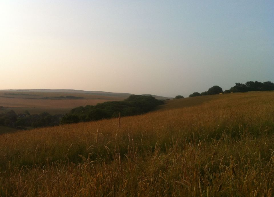 Morning on the South Downs 2