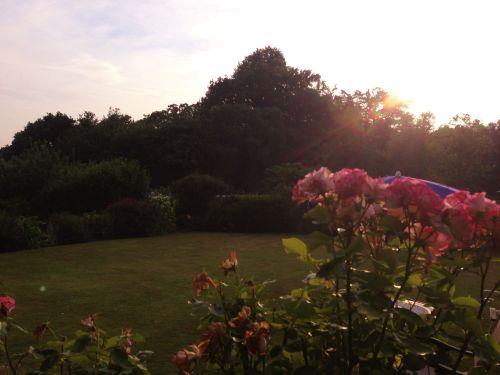 Sunset in the garden