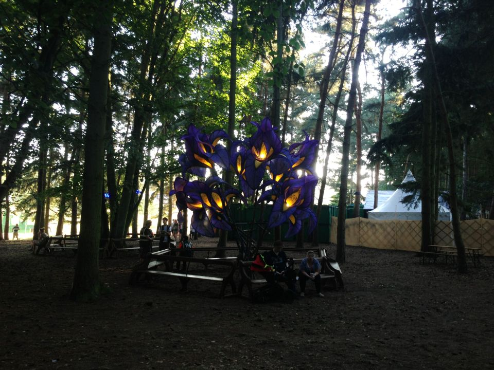 Latitude - flowers in the woods