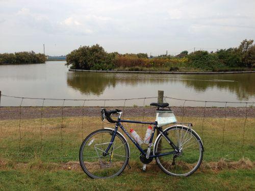 Ridgeback next to lake in Brightlingsea