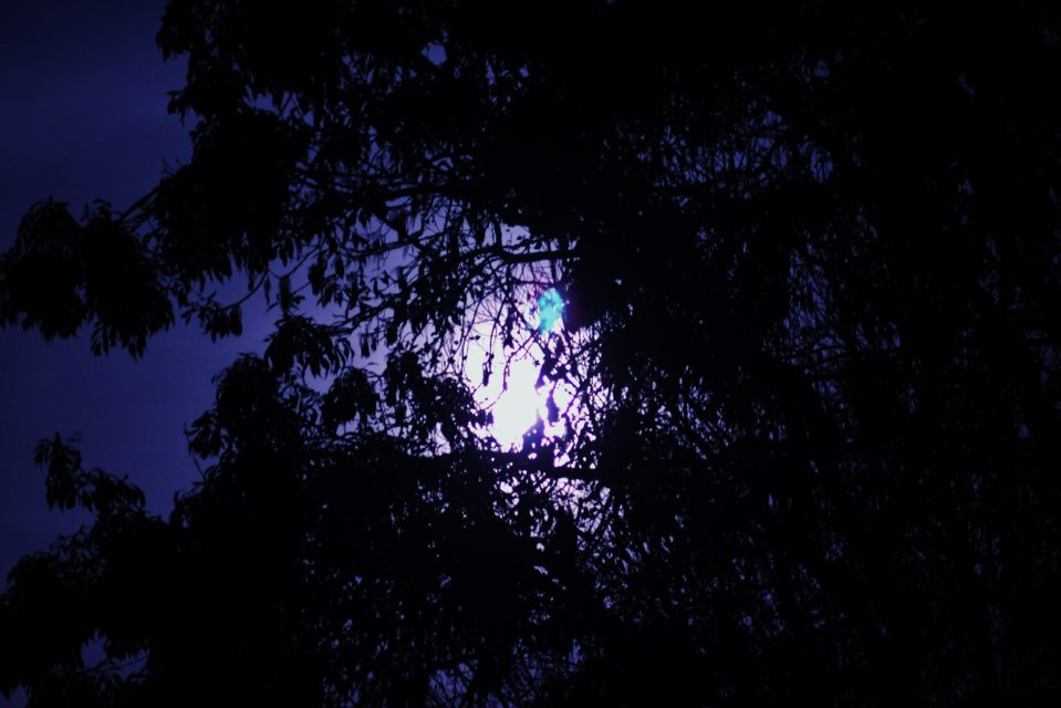 Moon shining through tree in Bawburgh 2