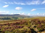Ingleborough - through the bonny heather
