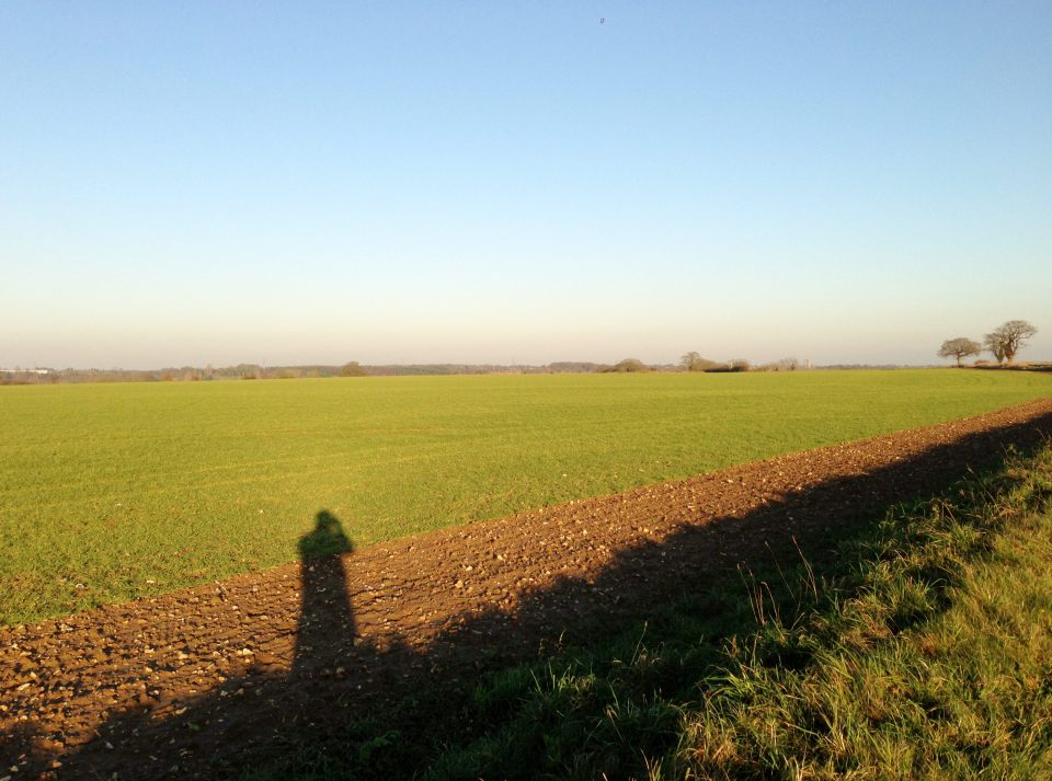 Fields sprouting green